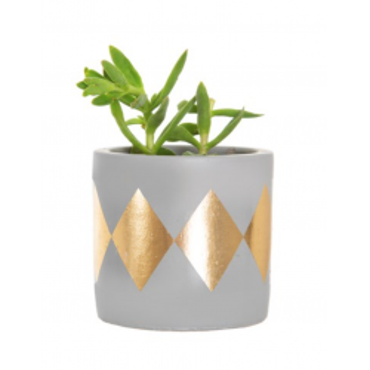 Mini diva planter